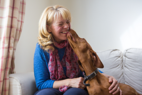 My Best Friend, Expert Dog Care, blog, article