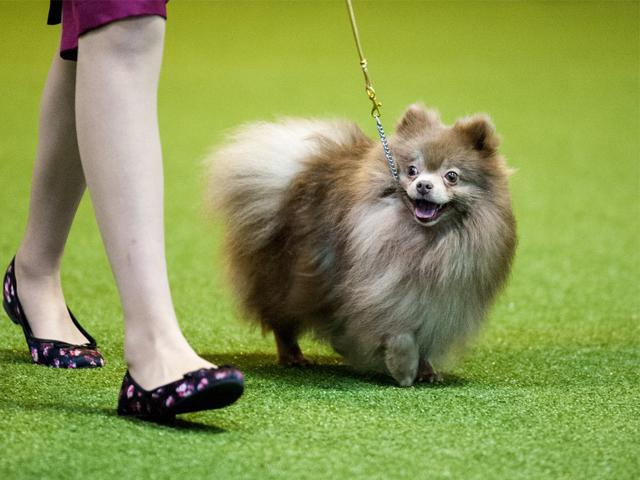 Michaela's Day at Crufts