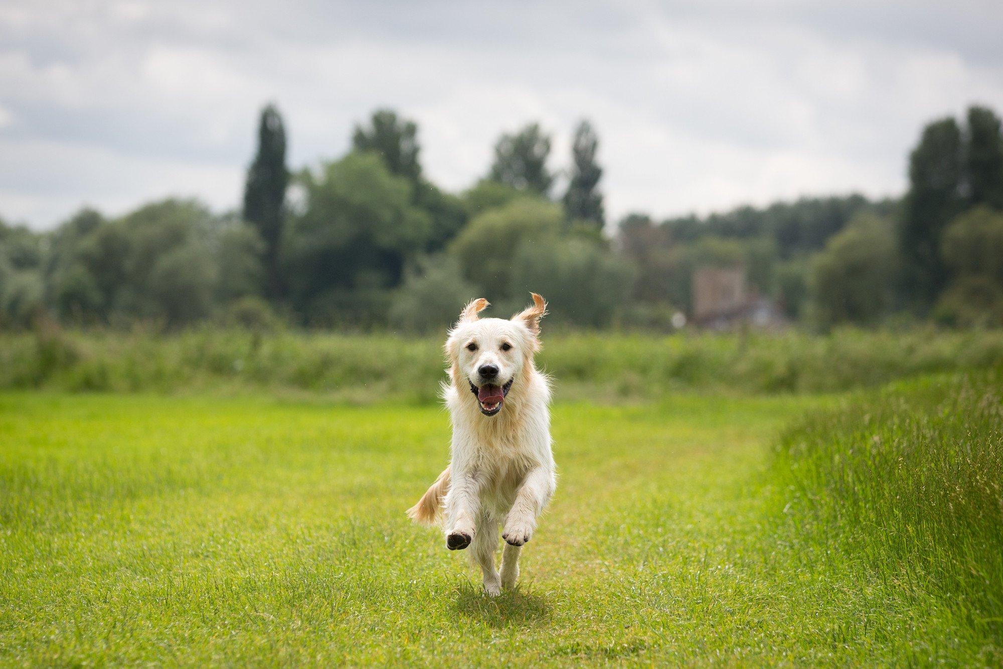 My Best Friend, Expert Dog Care, header, location