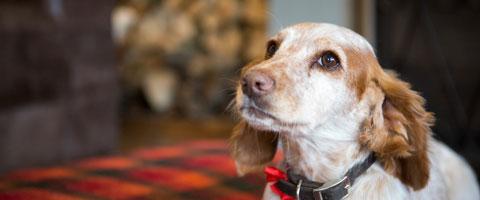 My Best Friend, Expert Dog Care