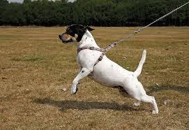 How to stop your dog pulling on the lead
