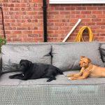 My Best Friend, Expert Dog Care, gallery