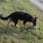 north shropshire dog care