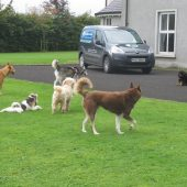 Doggy Day Care in Magherafelt