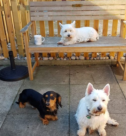 Dogs Home Near Rugeley: Dog Home Boarding Near Newport