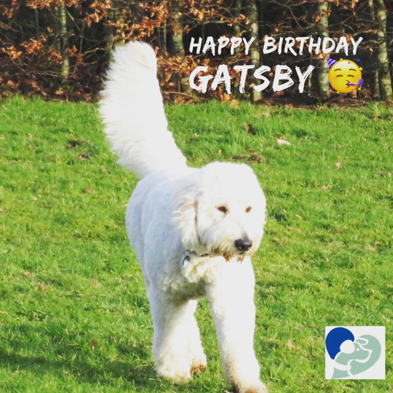 Prime Dog Friendly Birthday Cake My Best Friend Dog Care Personalised Birthday Cards Akebfashionlily Jamesorg